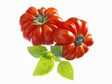 Two Beefsteak Tomatoes with Basil Leaves Photographic Print by Janez Puksic