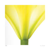 Yellow Green Lily Abstract No 338 Giclee Print by Shams Rasheed