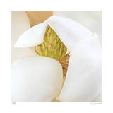 Magnolia Flower Abstract No 237 Giclee Print by Shams Rasheed