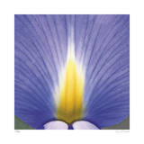 Blue Iris Abstract No 2 Giclee Print by Shams Rasheed
