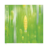 Horse Tail Grass Abstract No 24 Giclee Print by Shams Rasheed