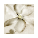 Whisper of Gardenia Giclee Print by Donna Geissler