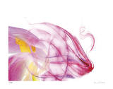 Purple Tulip Abstract No 128 Giclee Print by Shams Rasheed
