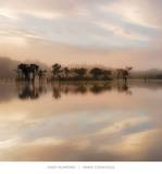 Dawn Mist on the Amazon Prints by Andy Mumford