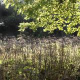 Arboretum de Chevreloup (botanical gardens), Rocquencourt, Yvelines, France Photographic Print by Manuel Cohen