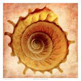 Stellaria Solaris 高品質プリント : リチャード・レイノルズ