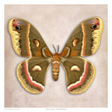 Moth Crecropia Print by Richard Reynolds