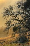 Diablo Tree Design Photographic Print by Vincent James