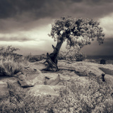 Mystery Tree at Dead Horse Point Fotoprint van Vincent James