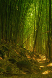 Bamboo Forest, Maui Photographic Print by Vincent James
