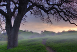 Pastel Morning Photographic Print by Vincent James
