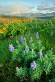 Rowena Flower Field and Rainbow Photographic Print by Vincent James