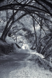 The Path, Infrared Photographic Print by Vincent James