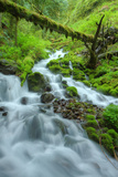 Lush Forest Stream in Spring Photographic Print by Vincent James