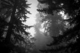 Misty Treetops, Redwood National Park Photographic Print by Vincent James