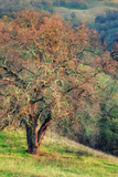 Diablo Winter Oak Photographic Print by Vincent James
