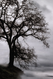 Tree in the Sky Photographic Print by Vincent James