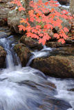 Autumn Stream & Color Fotoprint van Vincent James