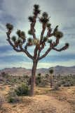 Joshua Tree Scene Photographic Print by Vincent James
