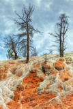 Hot Spring Trees, Yellowstone Fotografie-Druck von Vincent James