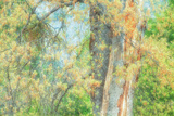 Spring Tree Impressions Photographic Print by Vincent James