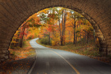 Autumn Tunnel Vision Photographic Print by Vincent James