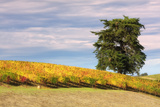 Napa Hillside in Autumn Photographic Print by Vincent James