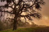 Late Afternoon Sun & Fog - Mount Diablo Fotoprint van Vincent James
