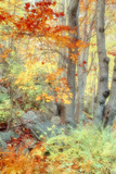 New England Fall Color Impressions Reproduction photographique par Vincent James