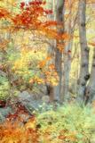 New England Fall Color Impressions Fotografisk trykk av Vincent James