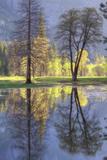 Valley Reflections at Yosemite Fotografie-Druck von Vincent James