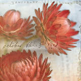 Red Strawflower I Print by Thea Schrack