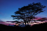 Daybreak Tree Photographic Print by Vincent James