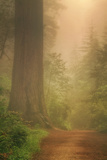 Forest Trail Photographic Print by Vincent James