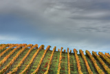 Sky and Vine Photographic Print by Vincent James