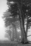 Coastal Trees Photographic Print by Vincent James