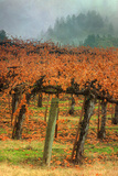 Autumn Misty Morning Vineyard, Napa Photographic Print by Vincent James