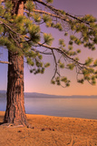 Morning Tree, South Lake Tahoe Photographic Print by Vincent James