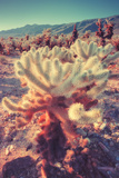 Scene at Cholla Cactus Garden Photographic Print by Vincent James