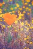 Retro Poppy Photographic Print by Vincent James