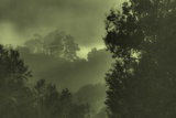 Trees in the Mist Photographic Print by Vincent James