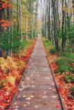 Wild Garden of Acadia Path Fotodruck von Vincent James