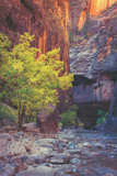 Virgin Narrows Nook, Zion Fotografie-Druck von Vincent James