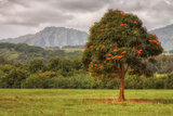 Kauai Roadside Scene Photographic Print by Vincent James