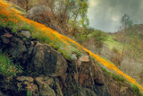 Spring in the Canyon Fotoprint van Vincent James