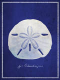 Sand Dollar Prints