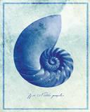 Nautilus Shell B Posters