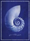 Nautilus Shell Poster