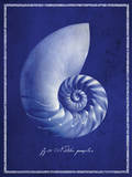 Nautilus Shell Plakat