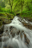 Forest Stream, Columbia River Gorge Photographic Print by Vincent James